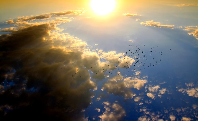 https://pixabay.com/en/sunset-birds-cloud-sun-sky-red-1625080/