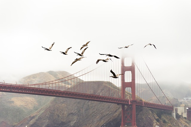 https://pixabay.com/en/birds-bridge-flight-flock-flying-1850169/