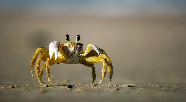 https://pixabay.com/en/crab-beach-sand-macro-closeup-1990198/